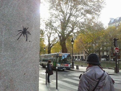 araignée_DH
