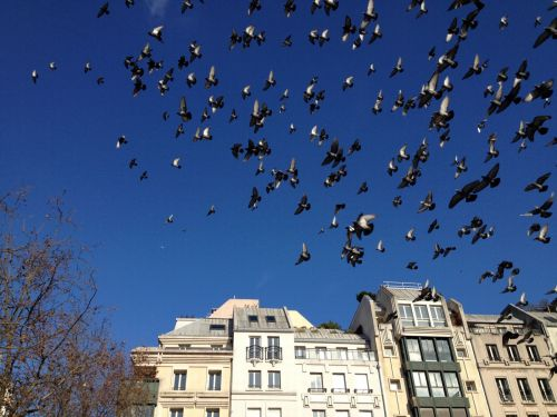 Oiseaux_DH